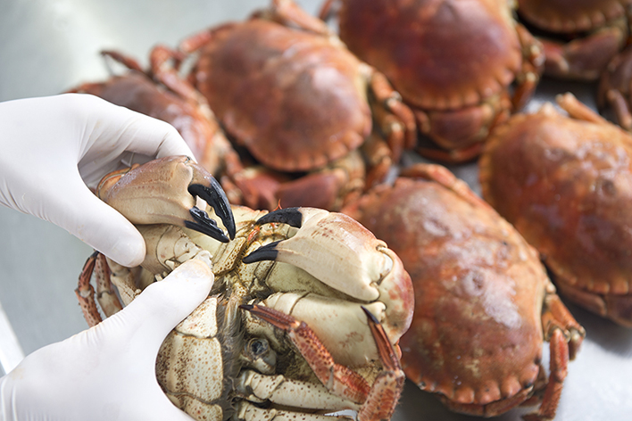 Itsasoko, más de 20 años elaborando productos derivados de pescado y mariscos naturales